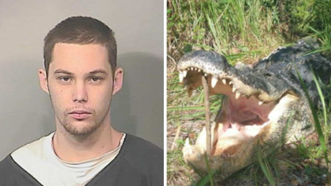 Burglary suspect hides in Florida lake, where gator eats him