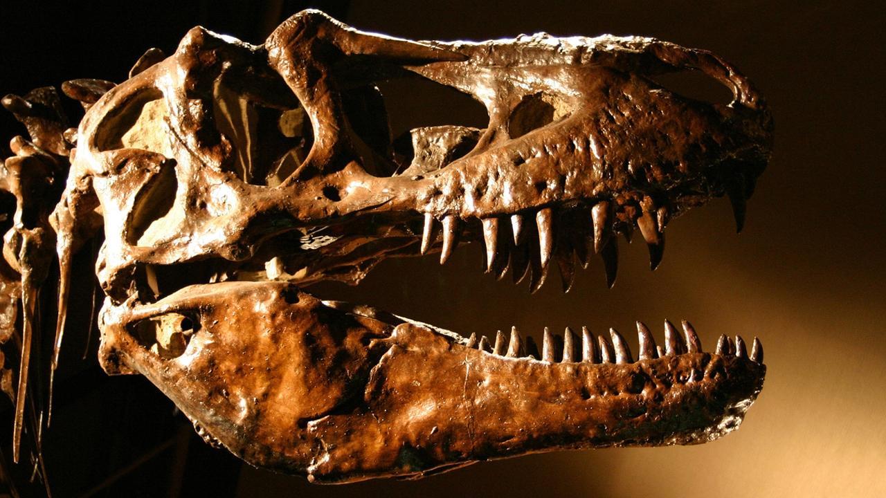 Dinosaur-killing space rock may have triggered huge volcanic eruptions