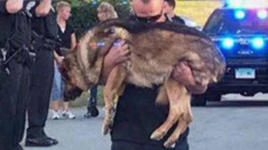 Conn. police dog gets final salute before being euthanized
