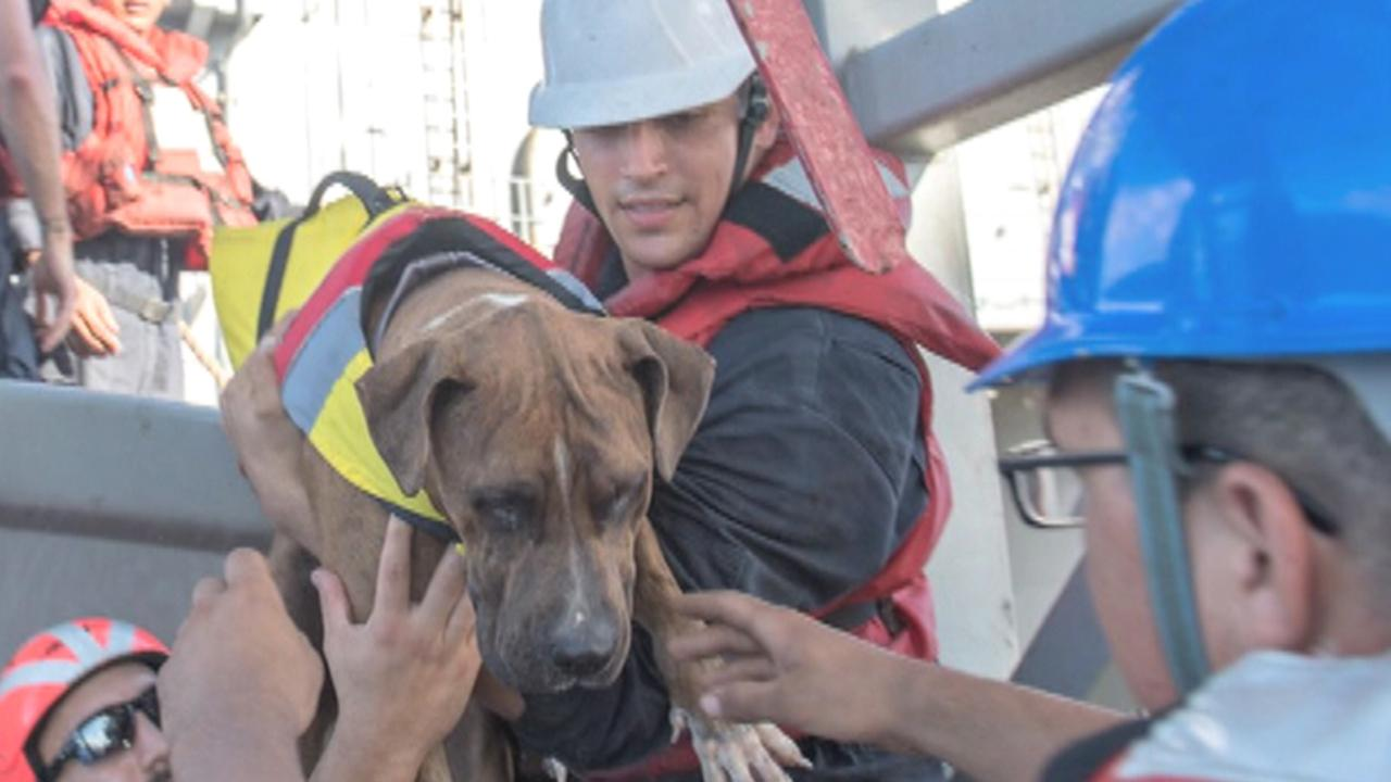 US Navy rescue sailors, dogs stranded at sea for months
