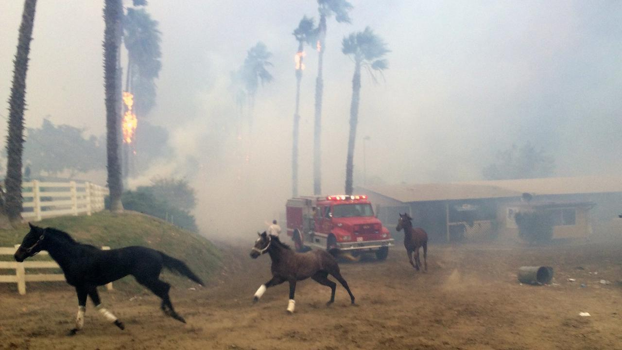 Racehorses set free as California wildfire nears training facility