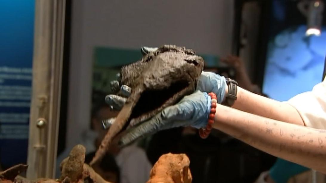 Pirate mystery: Does this 300-year-old bone belong to 'Black Sam' Bellamy?