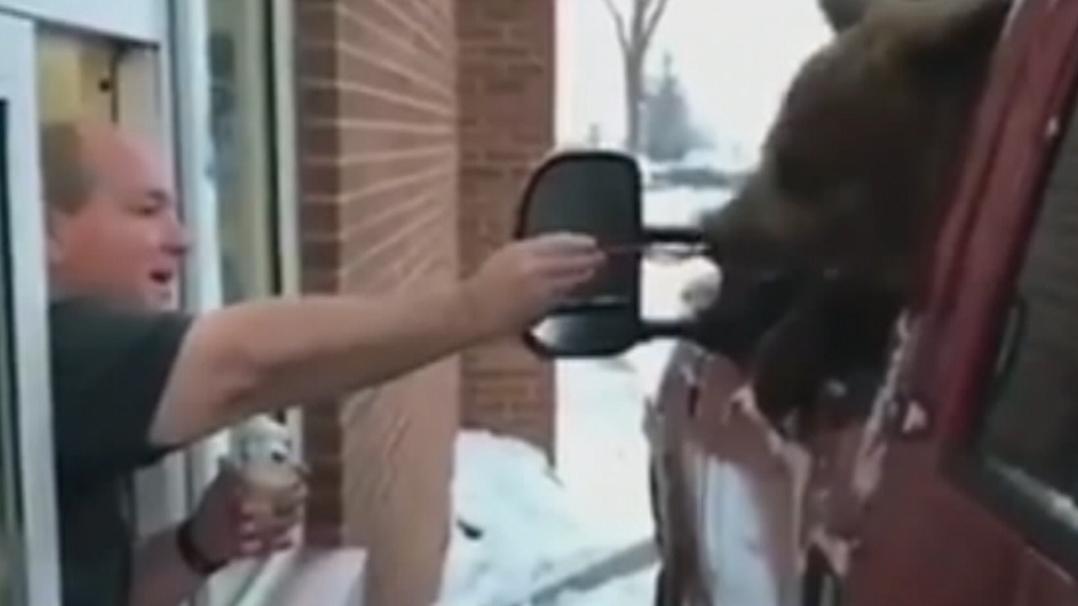 Bear's drive-thru stunt puts zoo in hot water