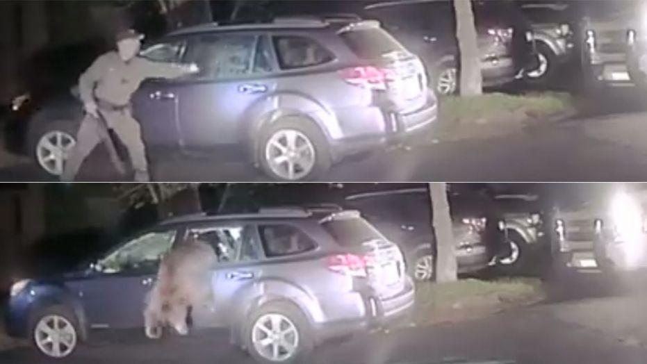 Bear breaks into car, police help it escape