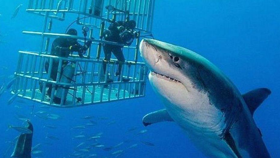 Great white shark lair in Pacific Ocean discovered by scientists