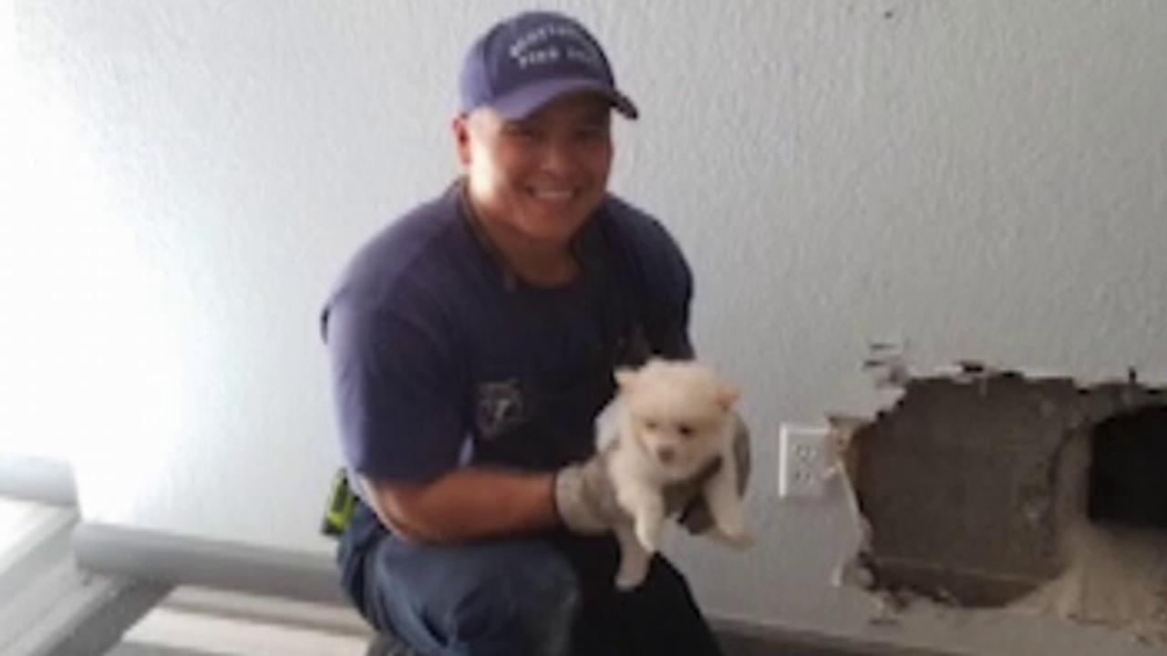 First responders save trapped puppy from chimney