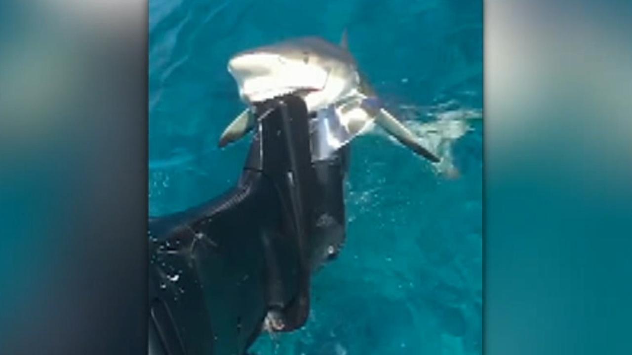 Shark in Bahamas tries eating fisherman's boat motor
