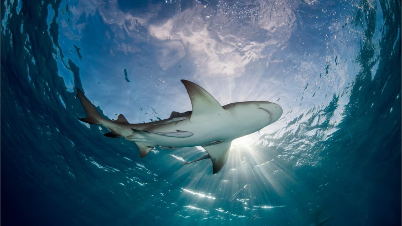 "Florida beach dubbed ""Shark capital of the world"" after shark attacks."