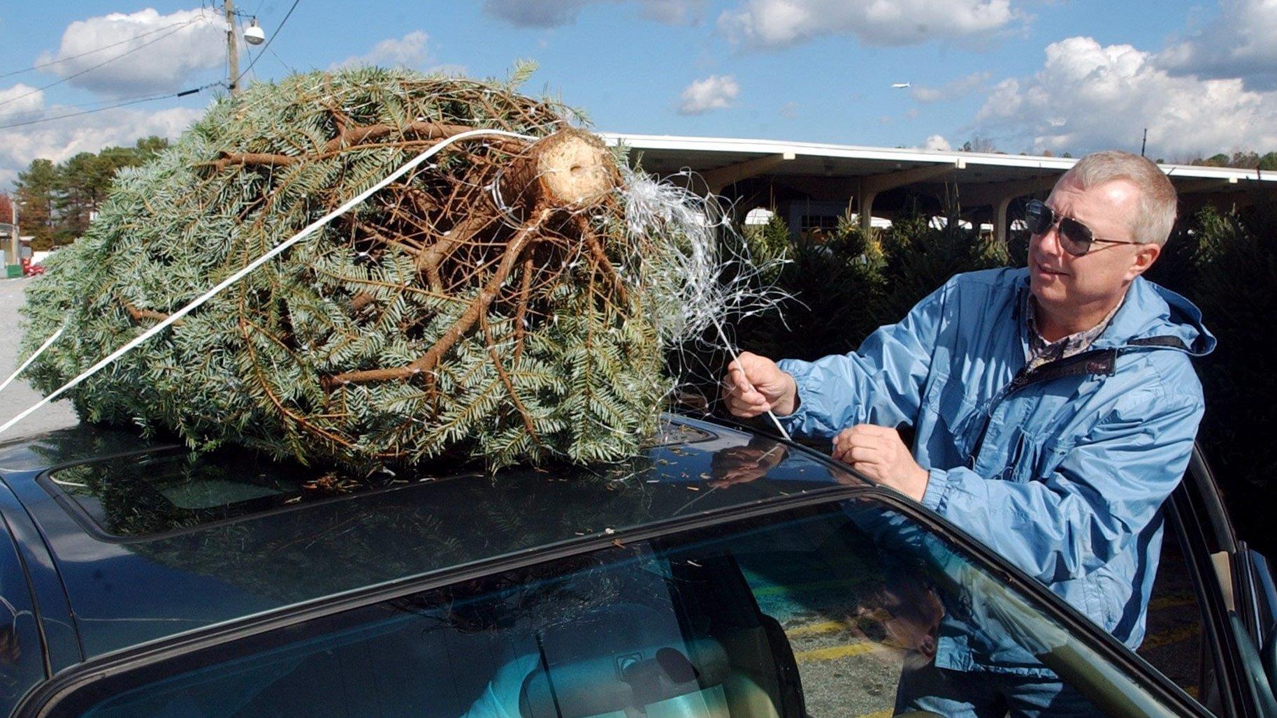 How to make your Christmas tree last all season