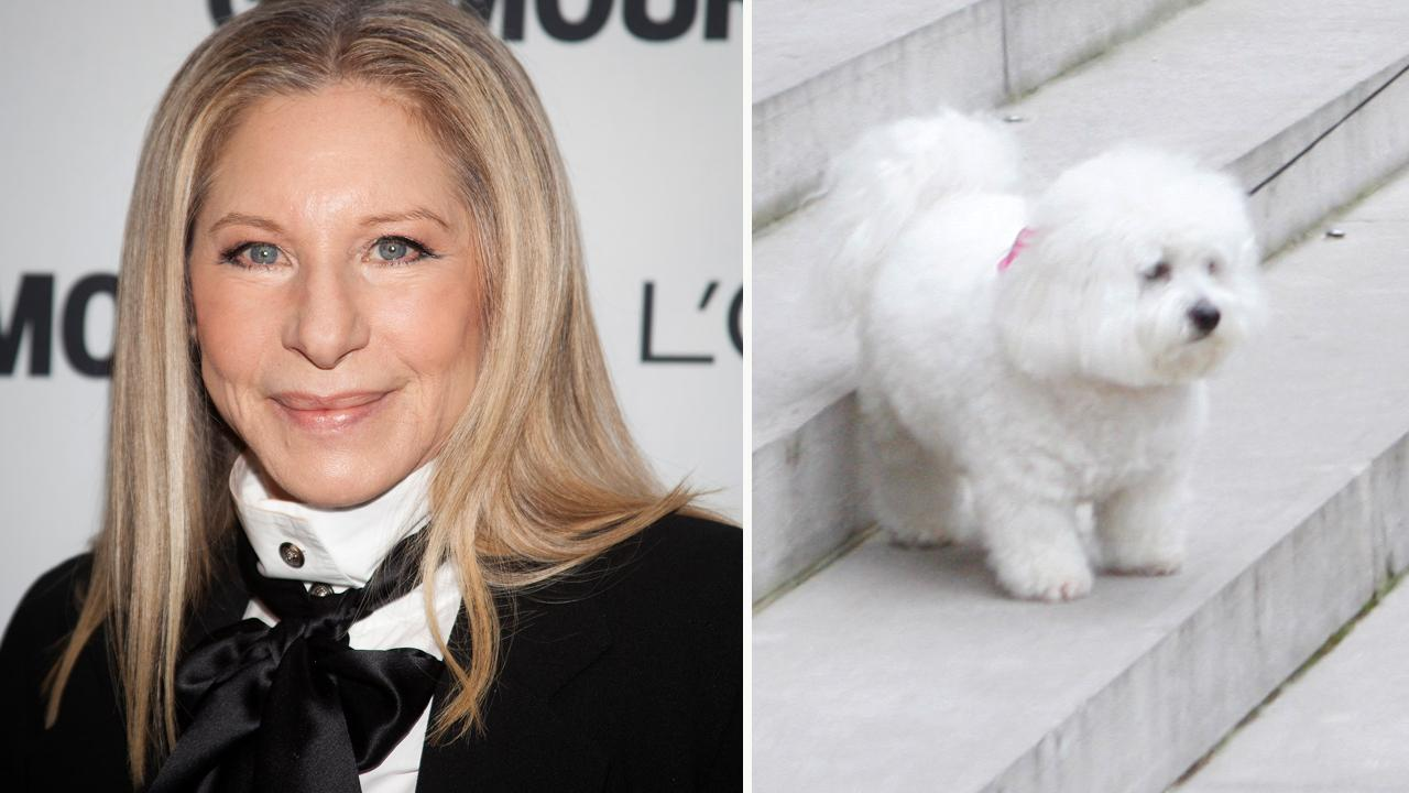 Westlake Legal Group 694940094001_5741608296001_5741595465001-vs Barbra Streisand flew her dogs 10,000 miles to watch her perform in London The Sun fox-news/person/barbra-streisand fox-news/entertainment/music fox-news/entertainment/genres/pets fox-news/entertainment/celebrity-news fox-news/entertainment fnc/entertainment fnc article 9787f6e5-59ef-537a-9c3c-4471c0854b32