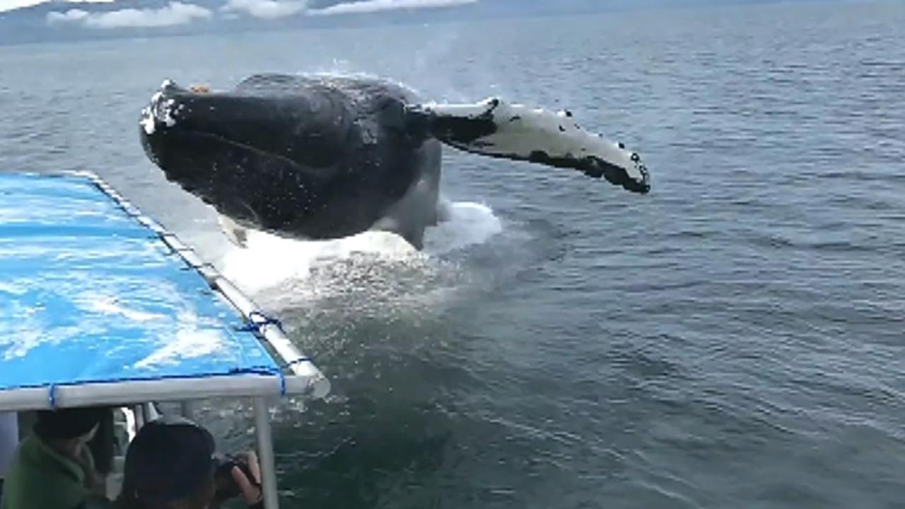Raw video: Humpback soaks whale watchers