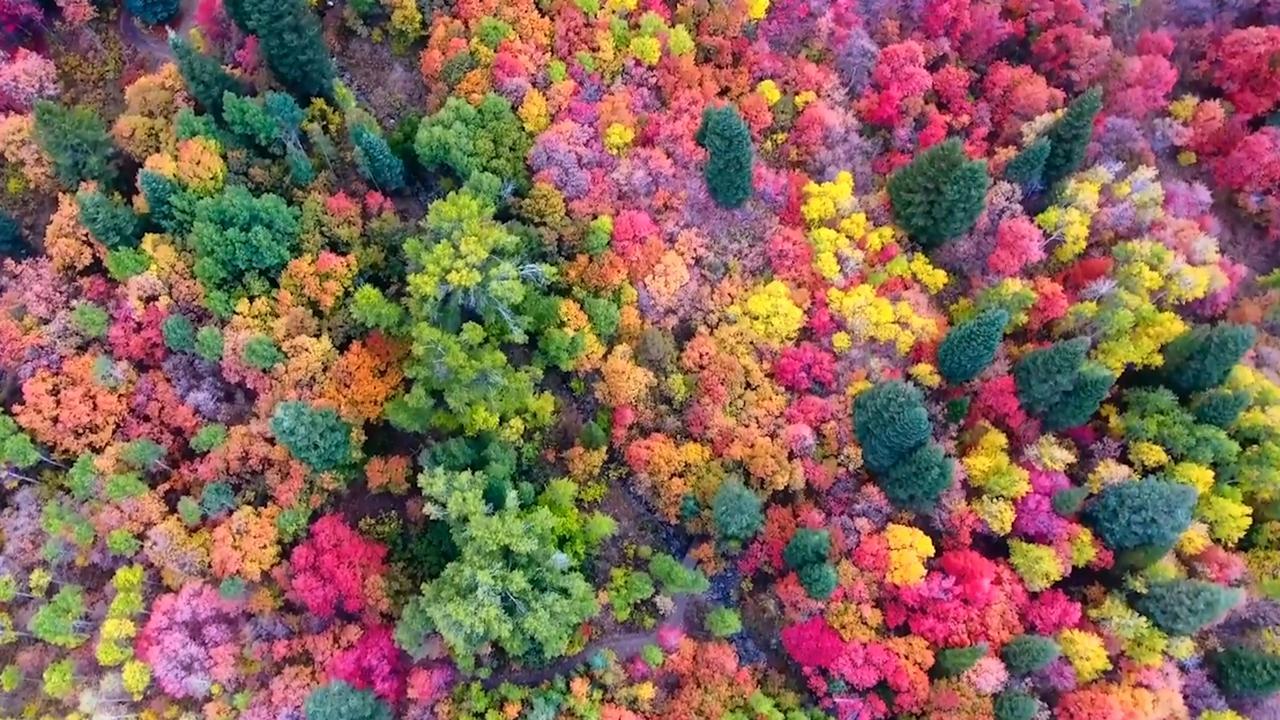 Mengapa Amerika mengatakan 'jatuh' di atas 'musim gugur'