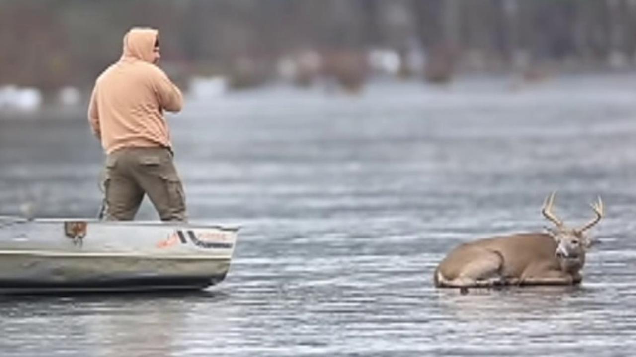 Pennsylvania man rescues deer from frozen lake