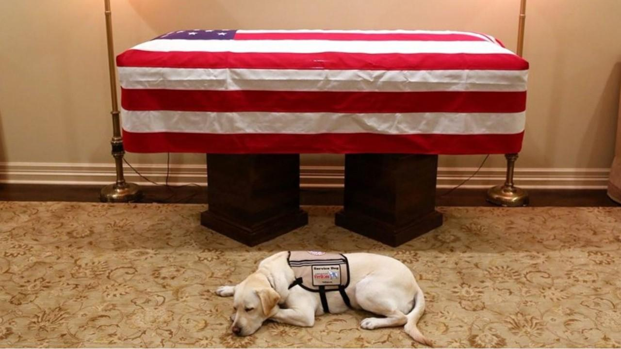 Bush family spokesman Jim McGrath on honoring the service dog who accompanied George H.W. Bush during the former president's final months.