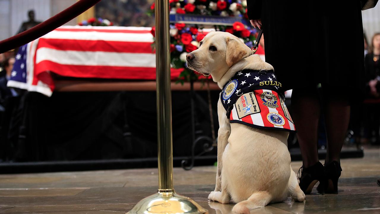 George H.W. Bush's service dog 'Sully' isn't a Democrat or Republican -- It's doggone crazy to attack him