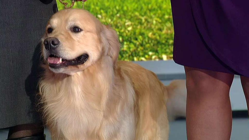 Iowa health officials confirm 'multiple cases' of bacterial disease that can spread from dogs to humans