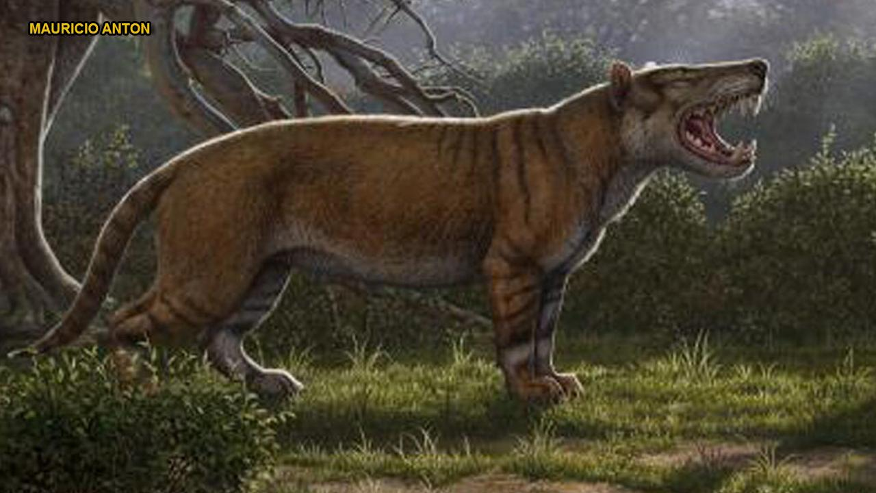 'Giant lion' fossils discovered in museum drawer