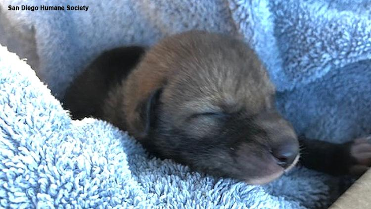 Hiker discovers cute 'abandoned puppy,' gets big surprise