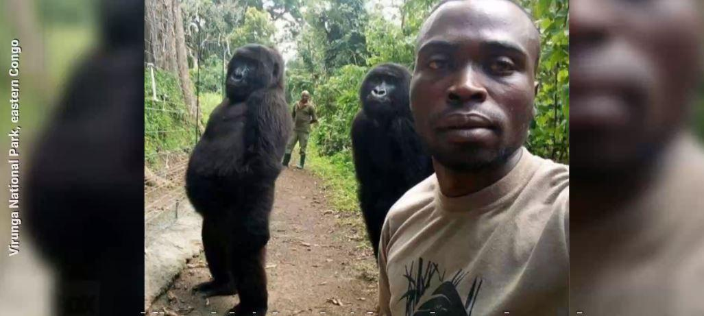 Westlake Legal Group 694940094001_6029036866001_6029031043001-vs 'Cheeky' gorillas pose for stunning selfie with rangers James Rogers fox-news/tech/topics/viral fox-news/science/wild-nature/mammals fox-news/science/wild-nature/endangered fox news fnc/tech fnc article 899d6e6f-7974-56c0-90e5-0db928b36900