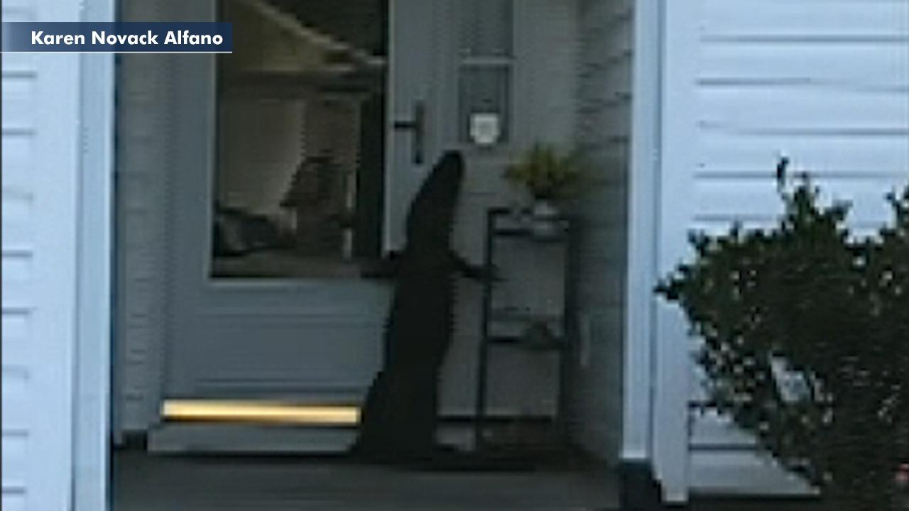 Alligator appears to ring doorbell as shocked homeowner looks on in South Carolina