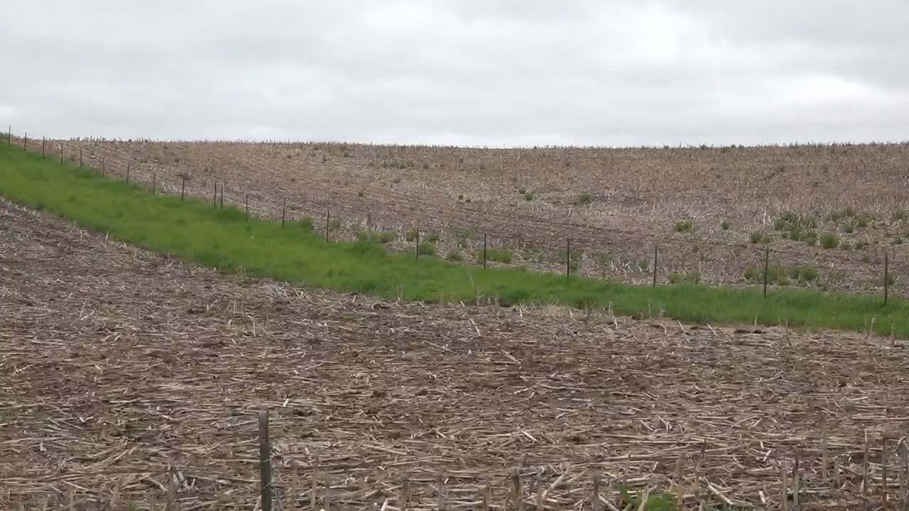 Farmers turn to hemp amid China trade dispute