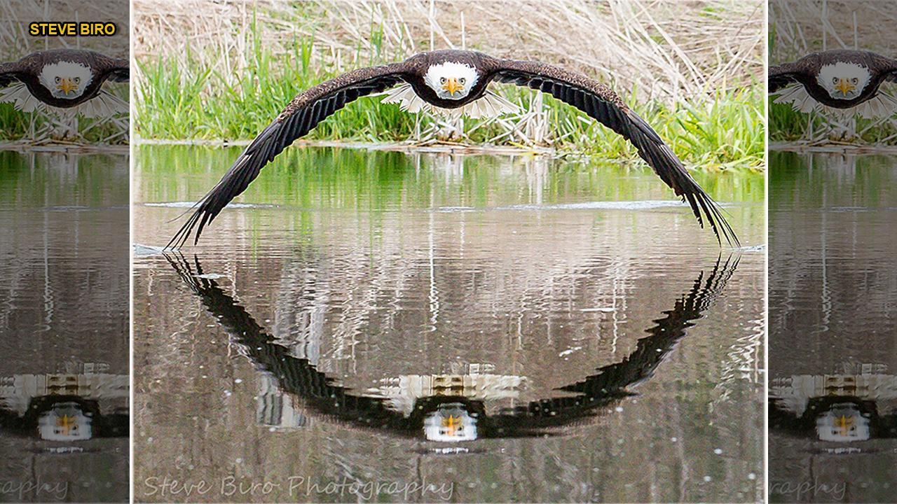 Stunning bald eagle photo becomes viral sensation