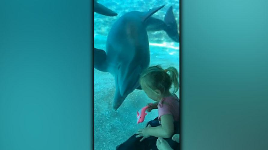 Westlake Legal Group 694940094001_6048885410001_6048891086001-vs Florida toddler befriends dolphins at SeaWorld in adorable video Stephen Sorace fox-news/us/us-regions/southeast/florida fox-news/tech/topics/viral fox-news/science/wild-nature/mammals fox news fnc/us fnc e4322064-b918-5ae1-ac49-de2e7afc271f article