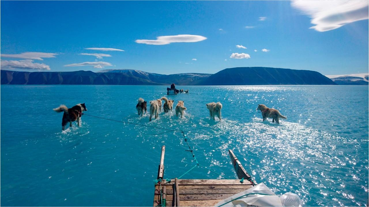 Stunning photo shows sled dogs 'walking on water' in Greenland