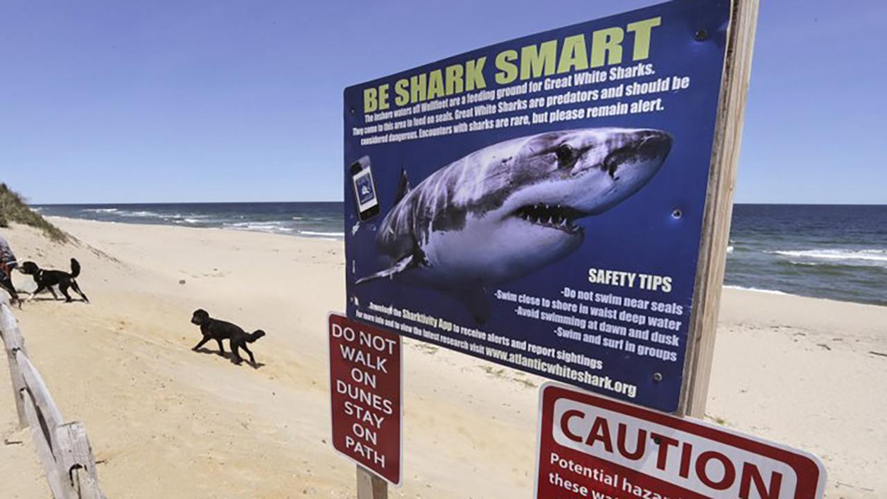 Separating fact from fiction about shark attacks