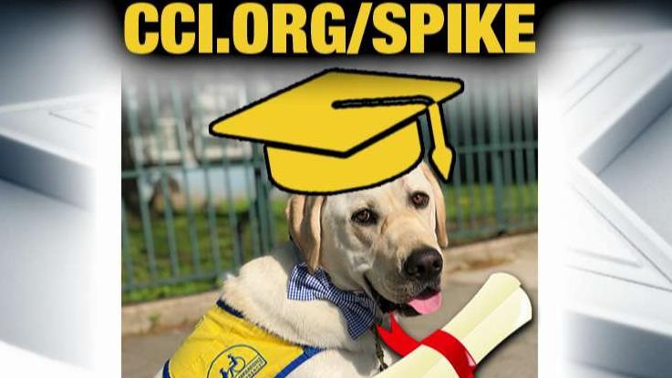 Spike heads off to 'doggie college'