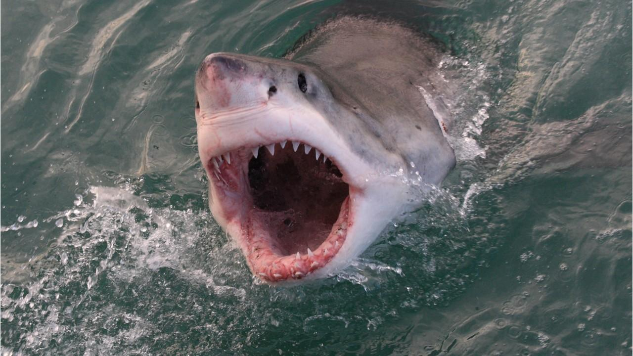 Report: Florida surfer attacked by shark opts for bar instead of hospital