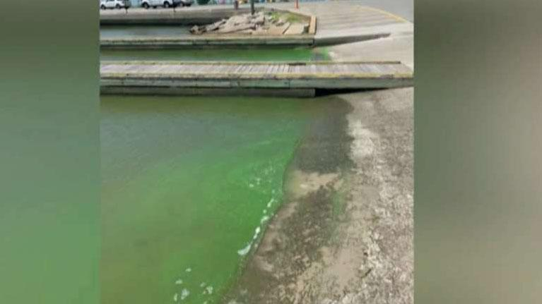 Dogs dying from toxic algae exposure after swimming in lakes