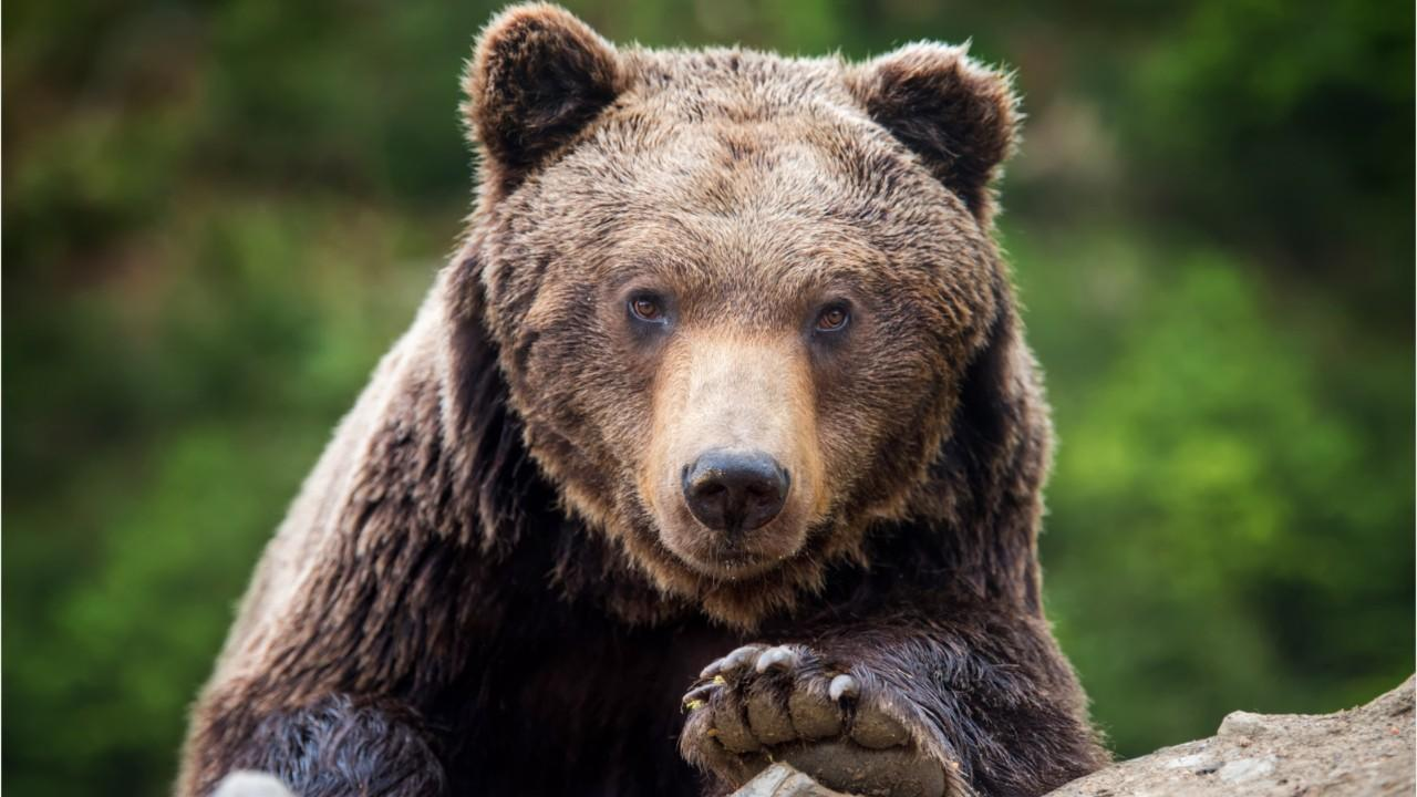 Westlake Legal Group 694940094001_6078381245001_6078392044001-vs Rare sighting of grizzly bears fighting in the middle of Canada highway caught on video Gerren Keith Gaynor fox-news/world/world-regions/canada fox news fnc/great-outdoors fnc article 2f9c99f7-f103-54c3-abe1-d8408e8c23de
