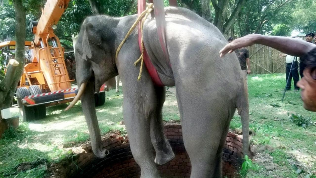 WATCH: Incredible images show elephant getting rescued from a 20-foot well in India