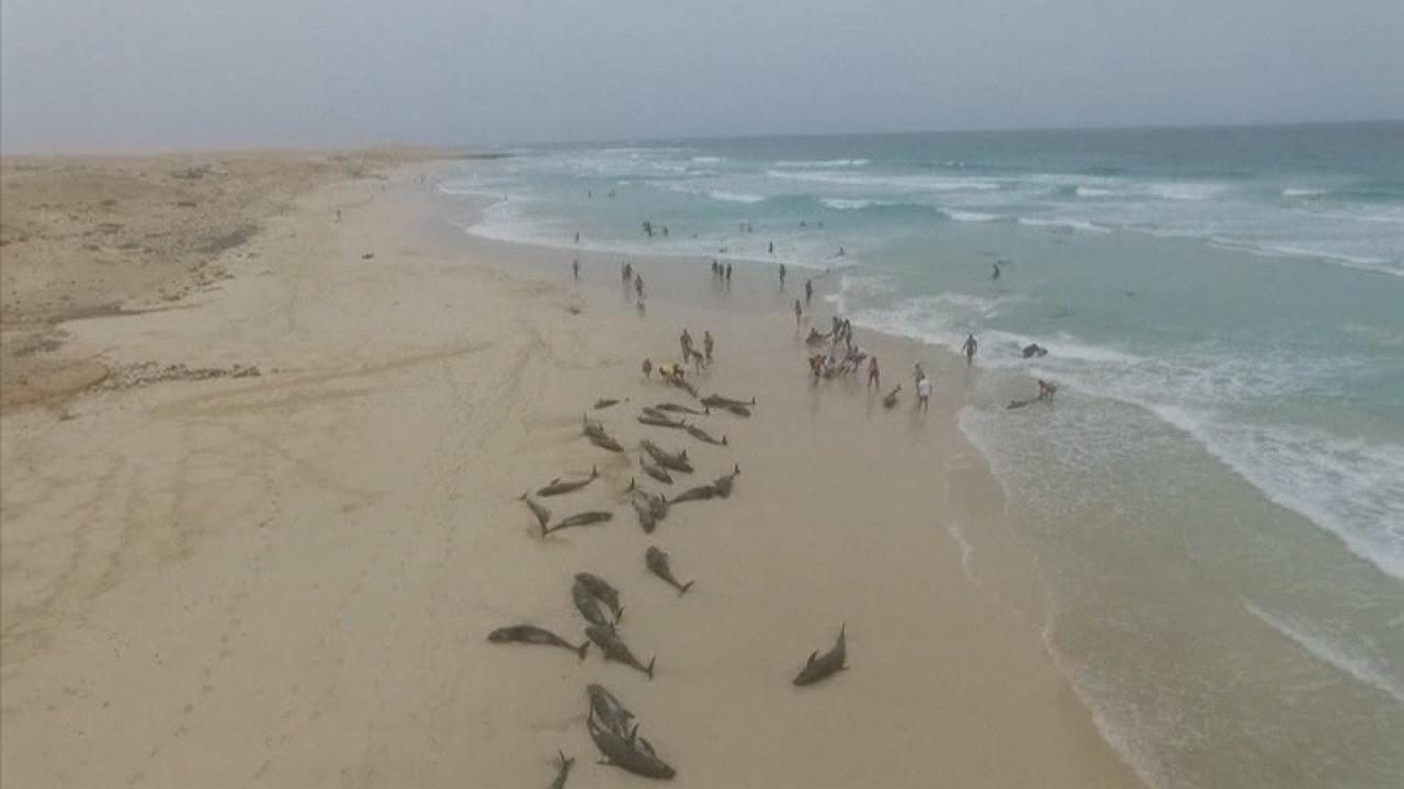 Westlake Legal Group 694940094001_6090414416001_6090422130001-vs More than 130 dolphins die on island beach off West Africa in mysterious mass stranding Stephen Sorace fox-news/world/world-regions/africa fox-news/science/wild-nature/mammals fox news fnc/science fnc bb1f2307-649b-5f29-a4a7-e15b63dee449 article