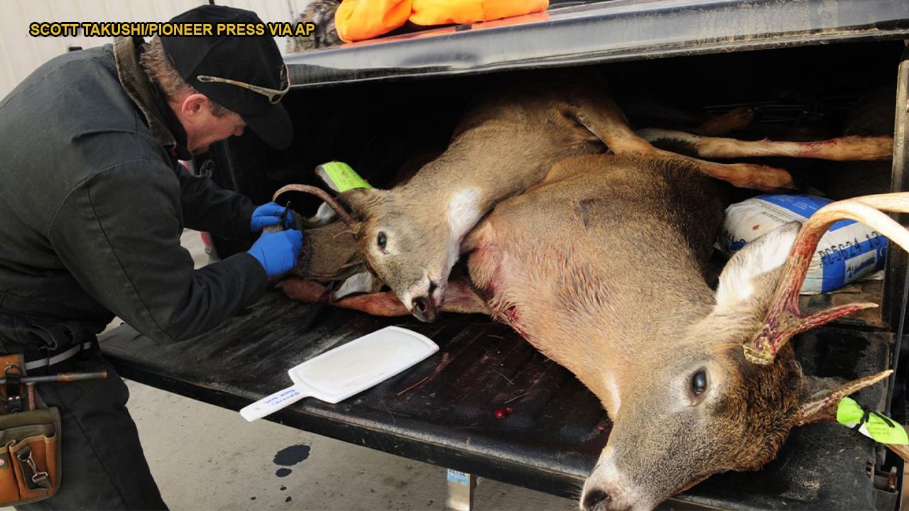 Westlake Legal Group 694940094001_6092970116001_6092970919001-vs Is chronic wasting disease in deer dangerous for humans? Manny Alvarez fox-news/health/wellness fox-news/health/ask-dr-manny fox-news/great-outdoors fox news fnc/health fnc article 9d03ab08-d93c-5e25-94b3-28e72bded8bd