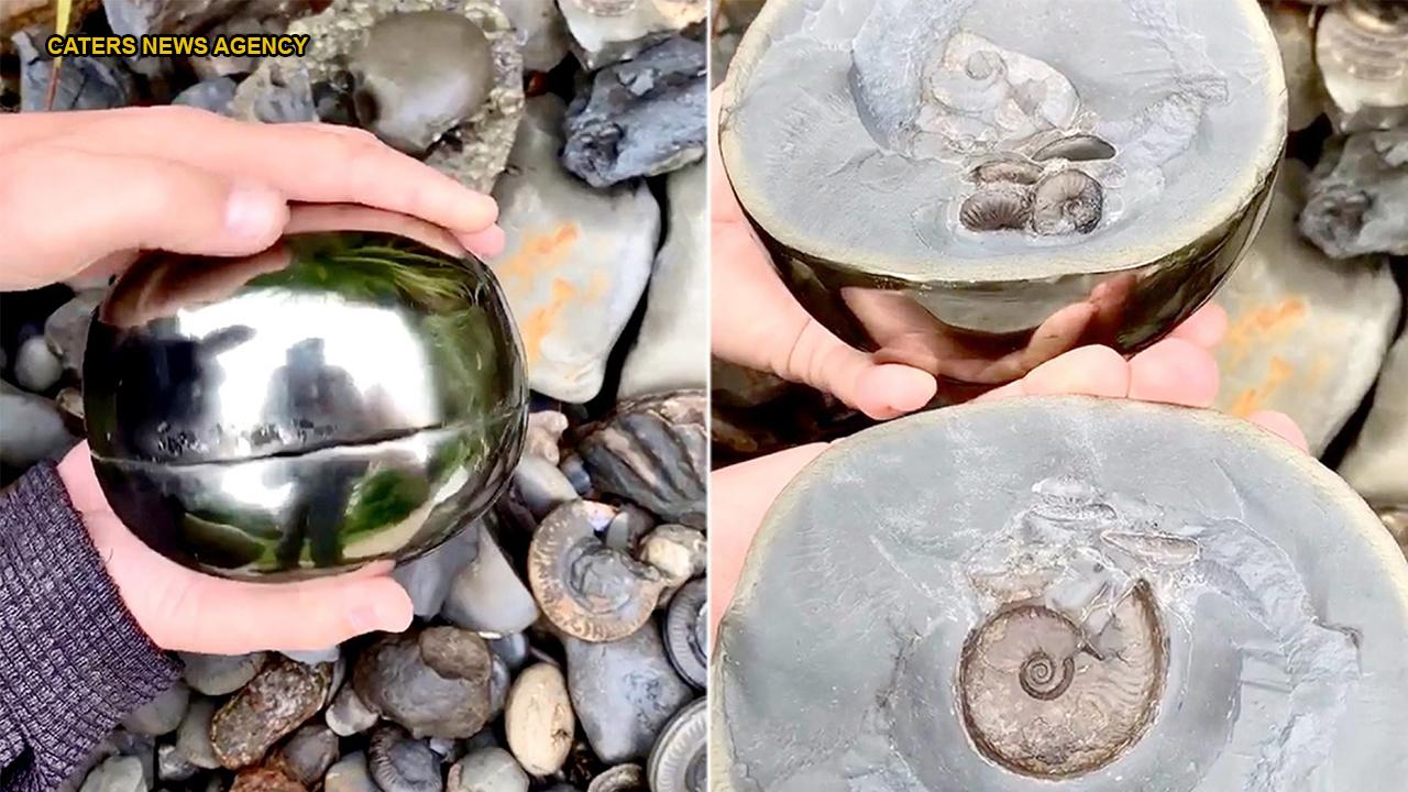 Fossil hunter finds 185M-year-old 'golden snitch' with ancient sea creature inside