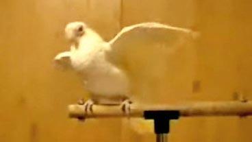 Boogie Down Birdie