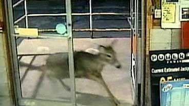 Deer Run?