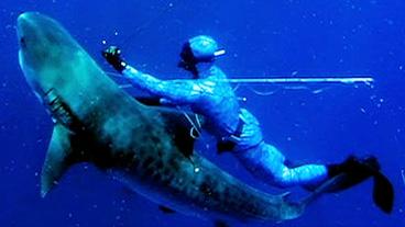 Man Stabs Tiger Shark