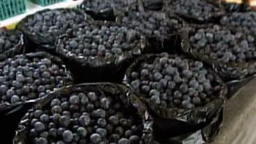 Blueberries Cut Belly Fat