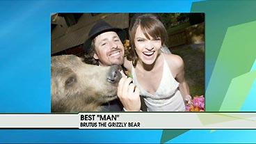 Best Bear
