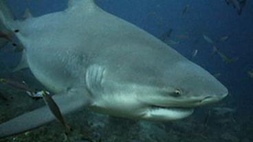 Shark Rips Off Boy's Hand