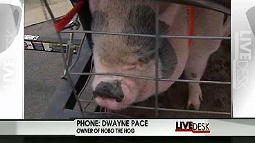 Hog on Hog
