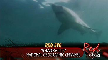 'Sharkville'