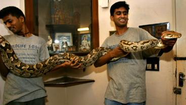 Aggressive Python Worries