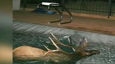 Surprise Swimmer