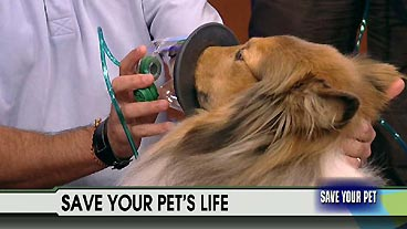 Save a Pet's Life