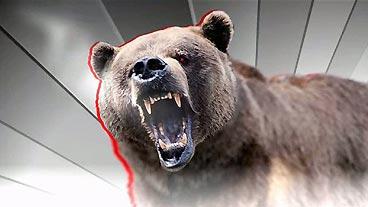 'We Like Bears'