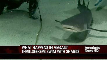 Vegas Thrills